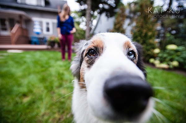 Kat Ku Photography - Ivan Australian Shepherd Royal Oak Michigan_06