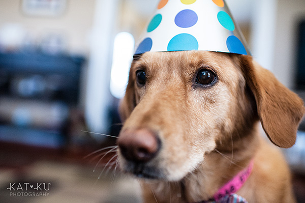 All Rights Reserved_Kat Ku_Birthday Puppy Party_20