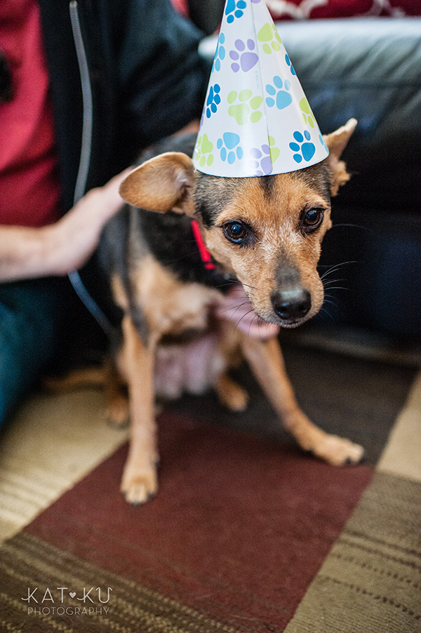 All Rights Reserved_Kat Ku_Puppy Party Birthday Bash_11
