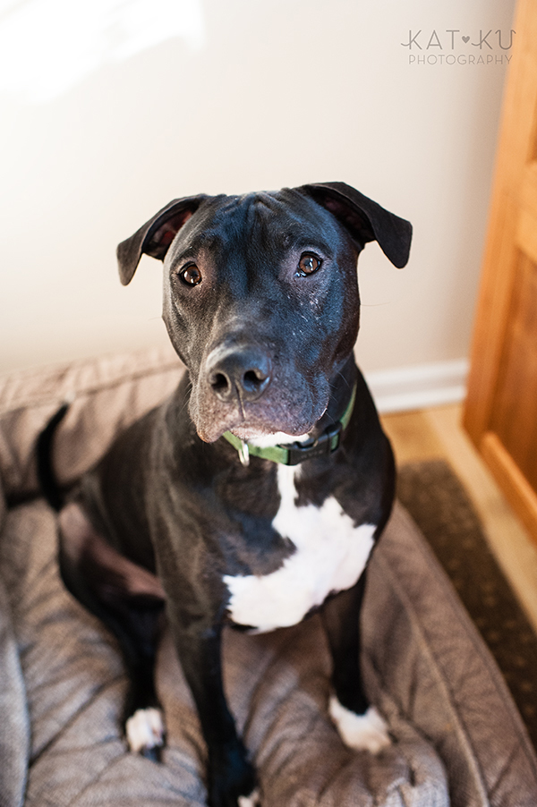 Kat Ku Photography_Ypsilanti_Rescue Dogs_13