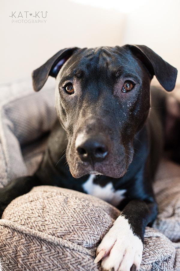 Kat Ku Photography_Ypsilanti_Rescue Dogs_14