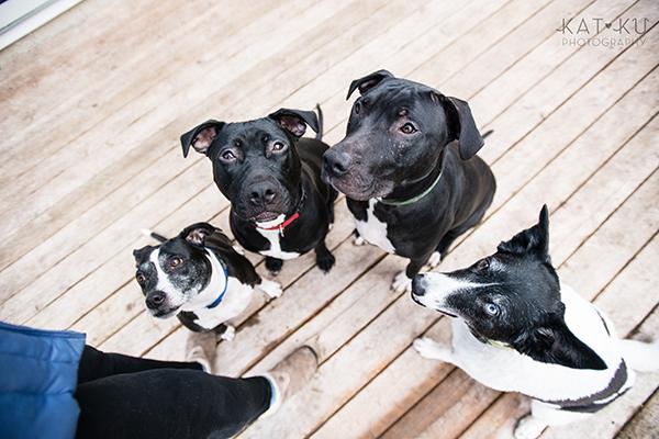 Kat Ku Photography_Ypsilanti_Rescue Dogs_15