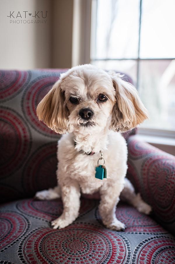 Kat Ku_Mattie and Jinx_Ann Arbor Dog Photography_03