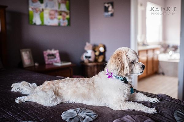 Kat Ku_Mattie and Jinx_Ann Arbor Dog Photography_12