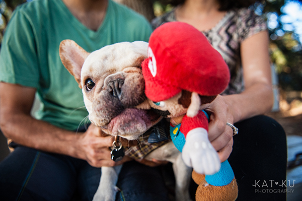 Kat Ku_San Francisco Pet Photography_Bowser_Frenchie_20