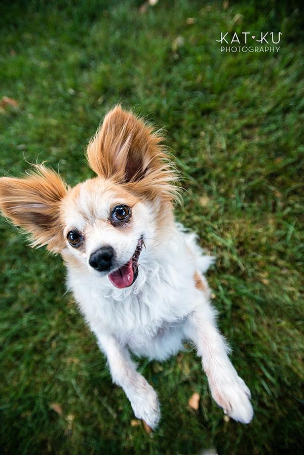 Kat Ku - Royal Oak Pet Photography_04