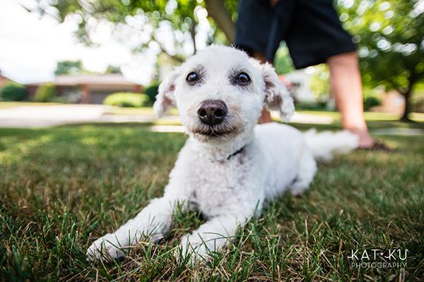 Kat Ku - Royal Oak Pet Photography_15