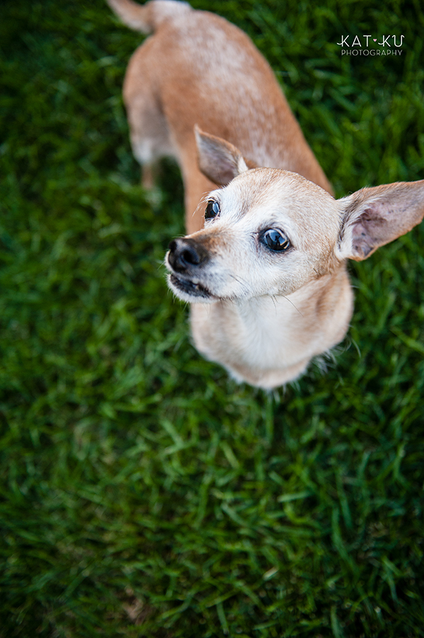 kat-ku-photography-detroit-michigan-dog-photos_11