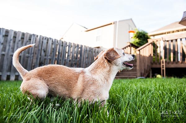 kat-ku-photography-detroit-michigan-dog-photos_22
