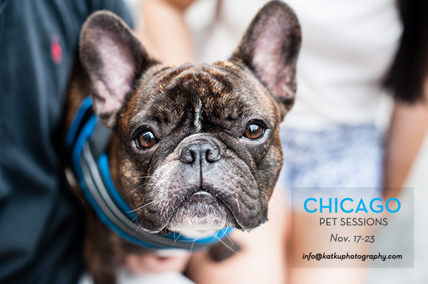 kat-ku-chicago-pet-photography