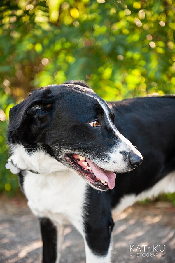 kat-ku-jake-heisenberg-detroit-dog-photos_06