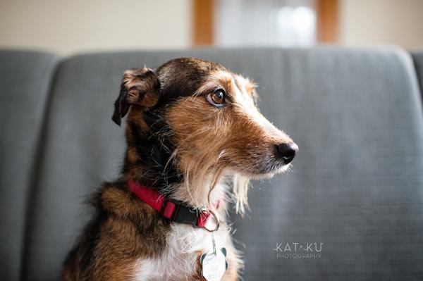 kat-ku-pet-photography-junebug-stanley_12