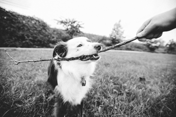 kat-ku-photography-dakota-australian-shepherd_13