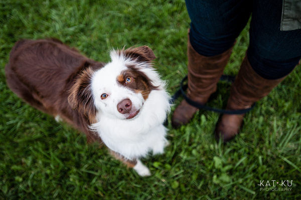 kat-ku-photography-dakota-australian-shepherd_14
