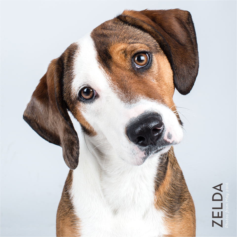 kat-ku-photography-zelda-foster-dog