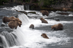 bears waterfall