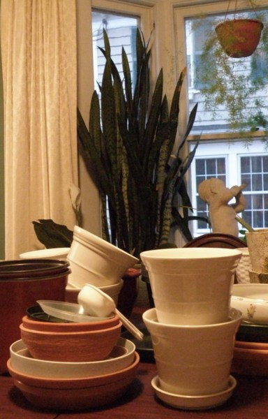 Plant pots on dining room table