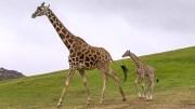 Uganda Wildlife Safari to Kidepo National Park 3 Days