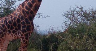 1 Day Akagera National Park Tour