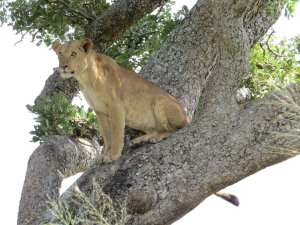 Activities in Queen Elizabeth National Park