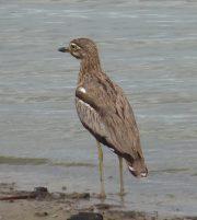 Uganda Birding Tour - Bird watching in Uganda 12 Days