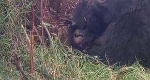 Gorilla Trekking Uganda from Kigali