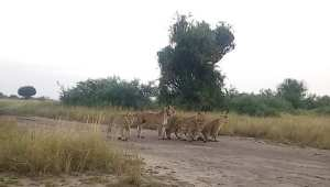 rwanda wild life safaris