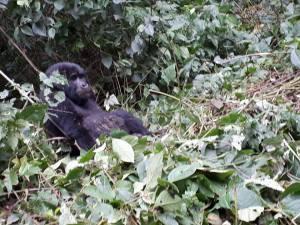 Kigali to BwindiGorilla Trekking