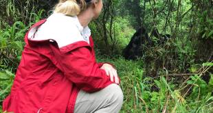 Mountain Gorilla National Parks