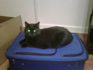 animal rescue stories, cat rescue