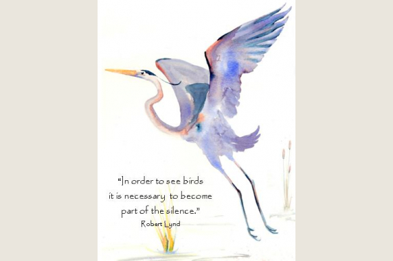 Assorted Bird Quote Note Card Gift Set Katrinas Cards