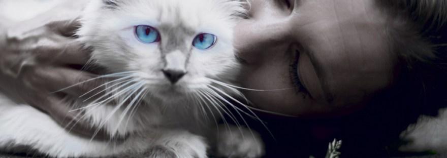 Alles over allergie voor katten.
