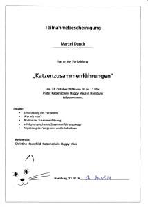 katzenseminar-Qualifikationfuer-den-katzensitter-gold-cat-katzenbetreuung-hamburg-katzenzusammenfuehrungen-katzenschule-happy-miez-hamburg