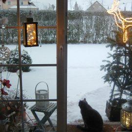 Katzen im Winter