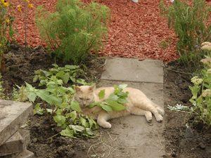 Vergiftungssymptome bei Katzen