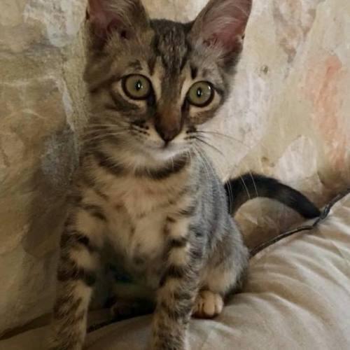 Lina (7)