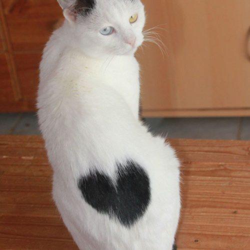 Syra-heart