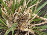 Closeup of center of plant