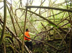 Vincent learning through Hau to Miconia site