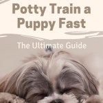 How To Potty Train A Puppy Fast The Ultimate Guide