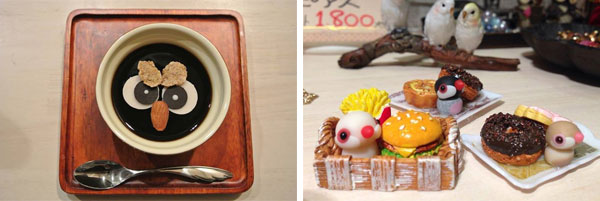 Bird-café