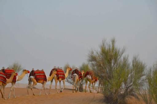 Passeios de luxo em Dubai