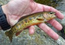 KFFC Sequoia Park trout WayneL DonnaL SteveF June 5, 2020