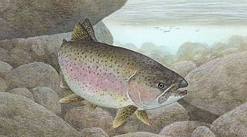 Trout in the Classroom Teacher Workshop Dates Announced
