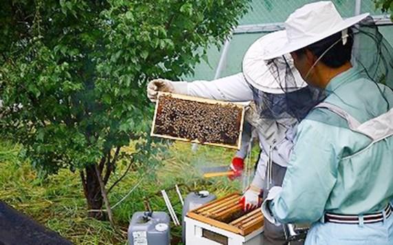 豊川市 ミツバチプロジェクト 養蜂事業 はちみつ採集
