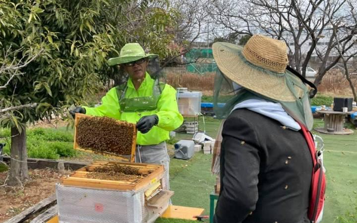 ミツバチ KAYAMAファーム 養蜂 愛知 豊川市
