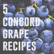 5 Concord Grape Recipes | Kaylee Eylander DIY