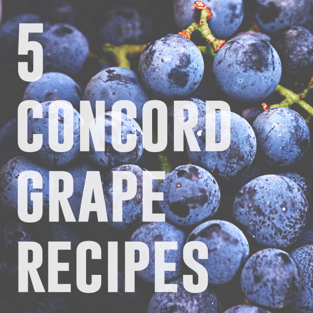 Grapes recipes concord