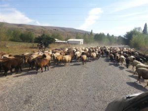 En Route in Kyrgyzstan