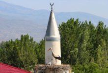 Photo of Gnijezda roda ukrašavaju munare džamije Huseinije